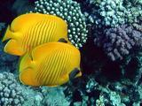 Фотографии рыб Красного моря сделаны без акваланга.