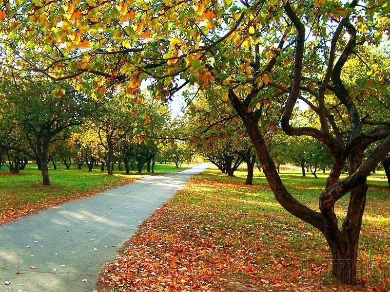 Бабье лето начнется одновременно сосенью— Гидрометцентр